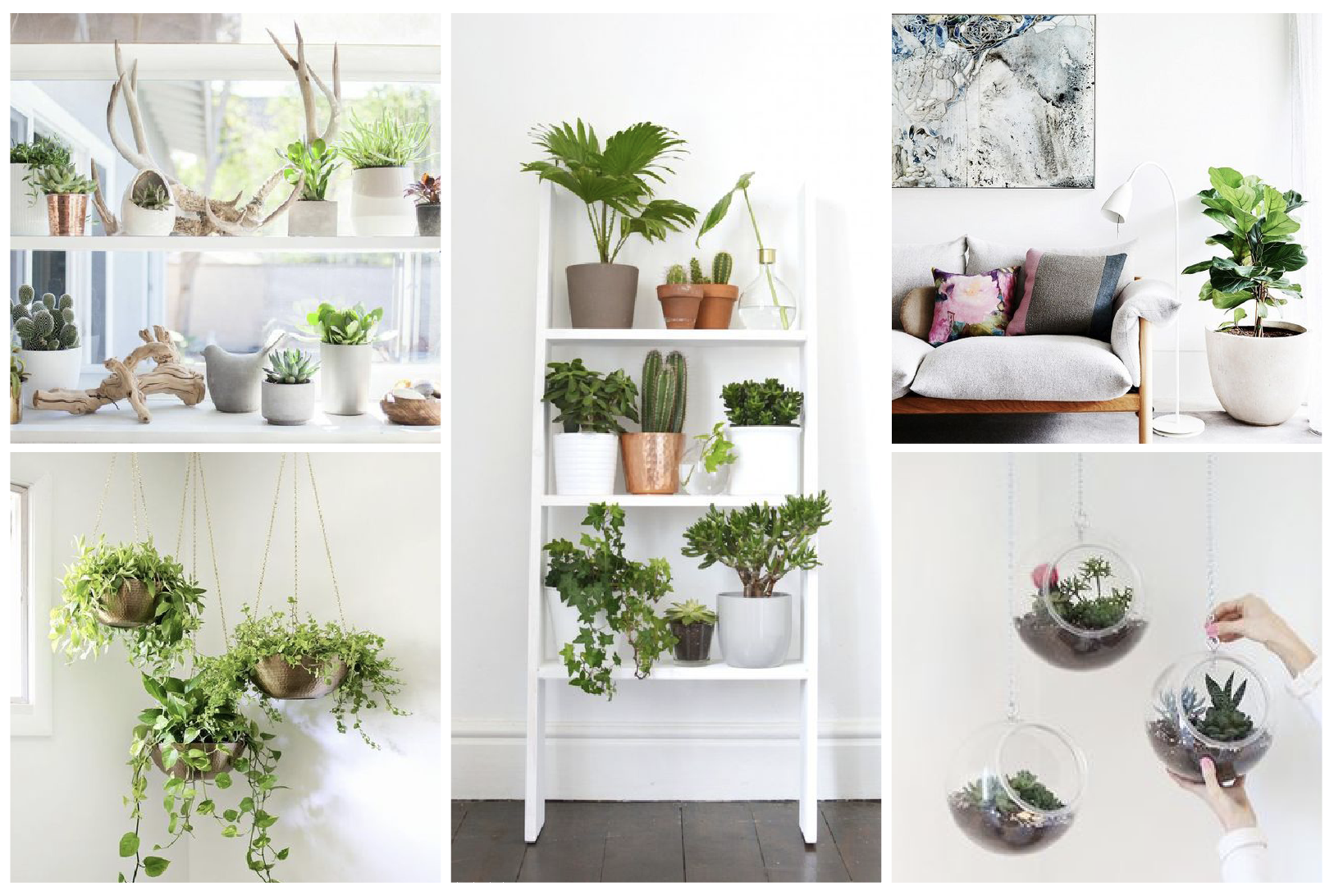 plante d intrieur peu de lumire elegant entretenir ses plantes vertes duintrieur with plante d. Black Bedroom Furniture Sets. Home Design Ideas
